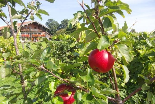 Apfel-Hof